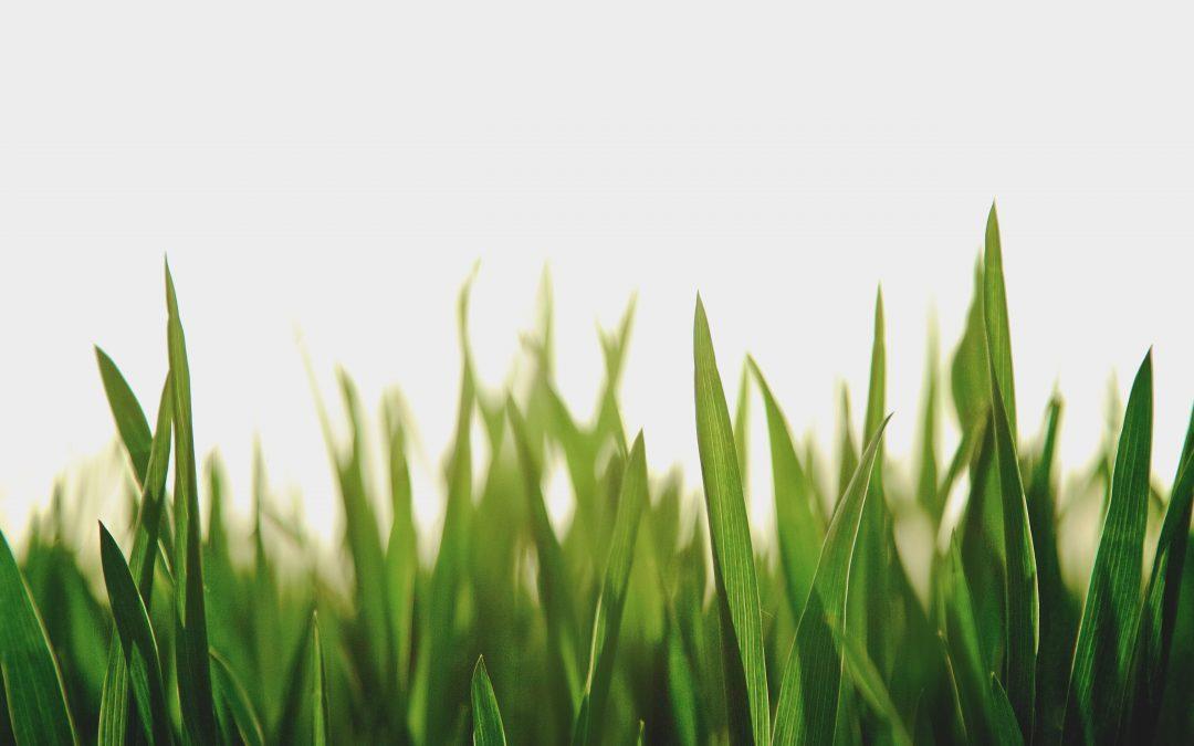 Gras groeit niet harder door eraan te trekken.